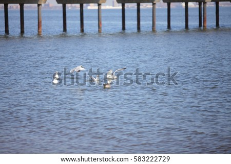 Beautiful seagull on the ocean coast of America.