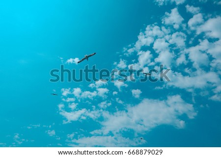 Beautiful seagull soar in the bright summer blue sky. One seabird at the clean sky background, symbol of freedom.