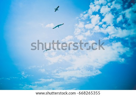 Beautiful seagulls flock soars in the bright summer blue sky. Couple seabirds at the clean sky background, symbol of freedom.