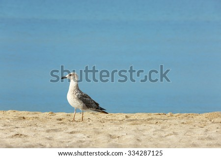 Beautiful seagulls on sand beach