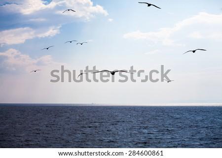Beautiful seagulls soaring in the blue sky  - stock photo
