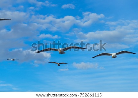Beautiful seagulls with clouds over Lake Baikal