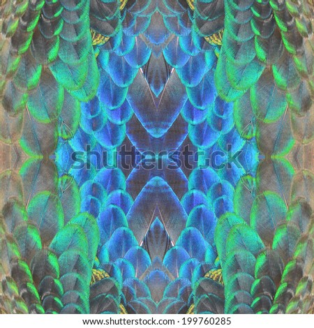 Beautiful seamless pattern made from Peacock Feathers - stock photo