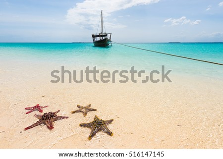 beautiful seascape with starfishes on a shore and ocean with boat on the background
