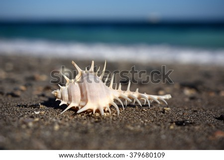 Beautiful seashell on the beach in Oman, close-up image (shallow depth of field) - stock photo