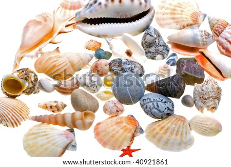 Beautiful seashells isolated on white background - stock photo