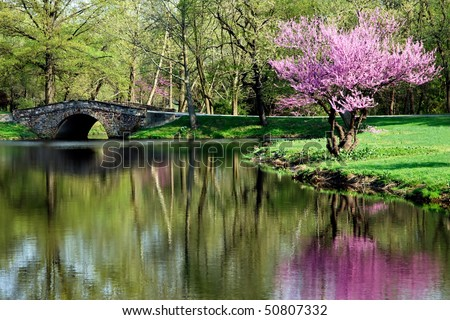 Beautiful secluded Pond - stock photo