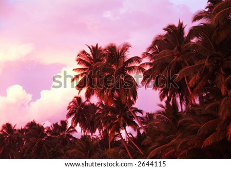 beautiful serene sunset on mirissa beach sri lanka - stock photo