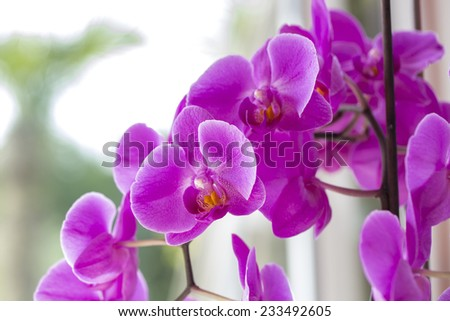 beautiful set of gorgeous orchid
