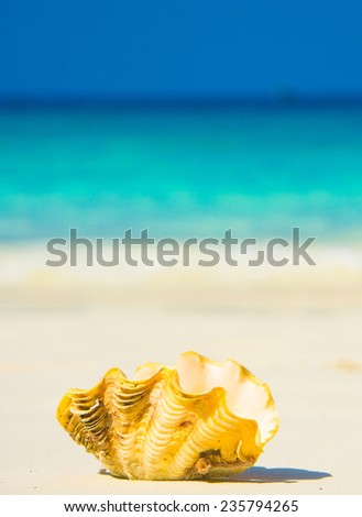 Beautiful Shell Idyllic Image  - stock photo