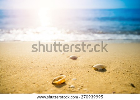 Beautiful shell on beach and sea with sunrise background. - stock photo