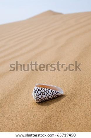 Beautiful shell over sand - stock photo