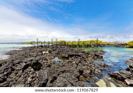 Beautiful shore of the galapagos, Ecuador - stock photo