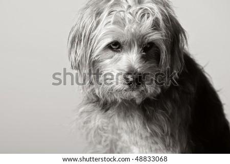Beautiful Shot of a Sad Looking Dog - stock photo