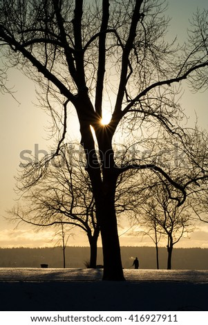 beautiful silhouette of a tree and a person walking his dog in a cold, snowy, winter sunset at Second Beach in English Bay, Vancouver, British Columbia, Canada. - stock photo