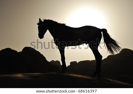 Beautiful silhouette of the horse in sunset - stock photo