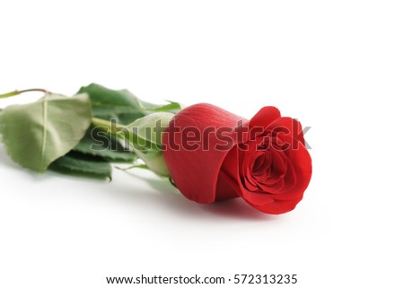 Beautiful Single Red Rose On White Background With Copy Space Isolated Photo