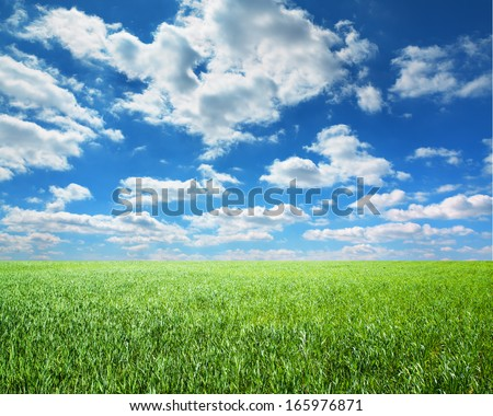 beautiful sky and summer fields  - stock photo