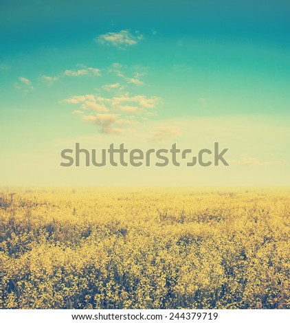 beautiful sky and yellow rapeseed field, retro film filtered, instagram style  - stock photo