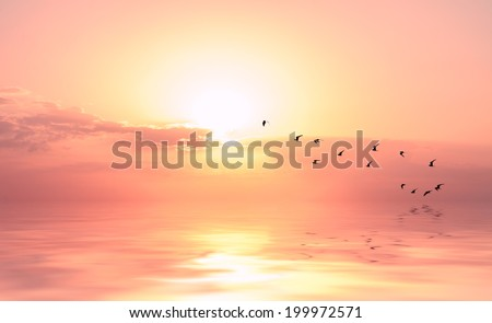 beautiful sky on sunset or sunrise with flying birds to the sun, natural background - stock photo