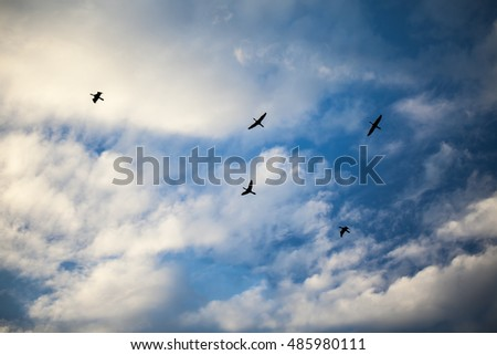 Beautiful sky on sunset with flying birds