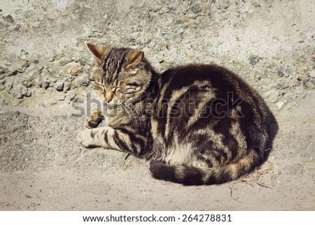 Beautiful sleepy gray striped cat is sleeping outdoors - stock photo