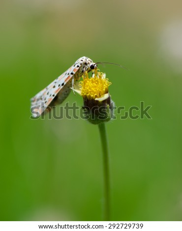 Beautiful small butterfly on white flower with green background, nature background.