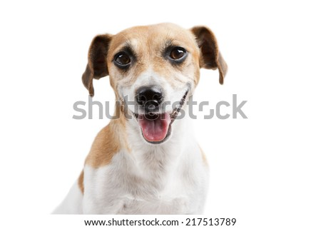 Beautiful smiling dog portrait - stock photo