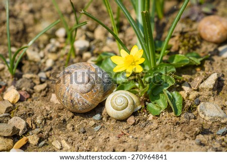 Beautiful snail shells with yellow flower in a natural setting - stock photo