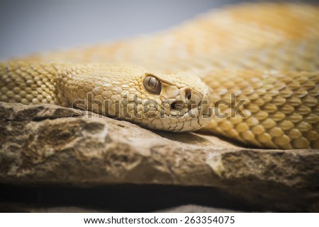 Beautiful snake lying in the sun with fine scales on their skin