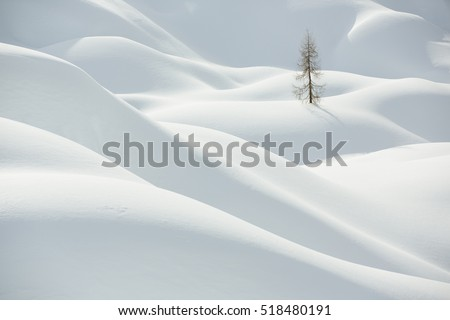 Beautiful snow covered hills with pine tree, winter landscape