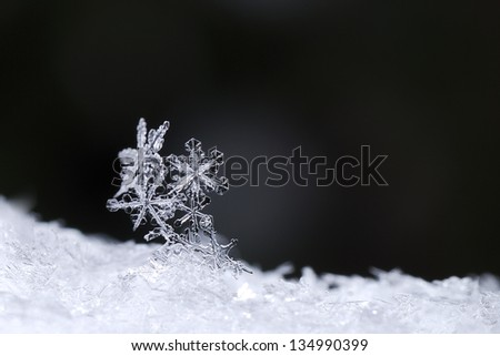 beautiful snow crystals on black background in winter - stock photo
