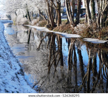 Beautiful Snow Trees Reflection on Roadside