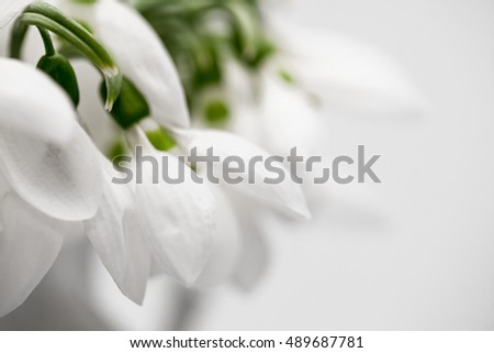 Beautiful snowdrops in a bouquet with details