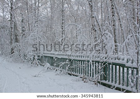 Beautiful snowy forest cold winter in December
