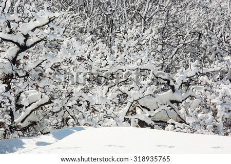 Beautiful snowy winter landscape. White forest. Natural background. - stock photo