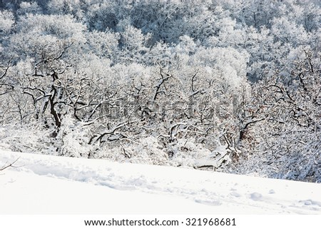 Beautiful snowy winter landscape. White forest. Path in the snow. - stock photo