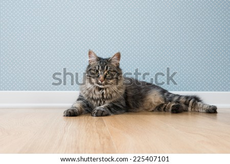 Beautiful soft cat relaxing on hardwood floor against dotted vintage wallpaper. - stock photo