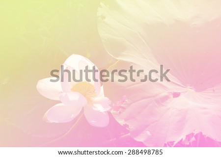Beautiful soft color pink and blue flowers backgrounds nature - Lotus - stock photo