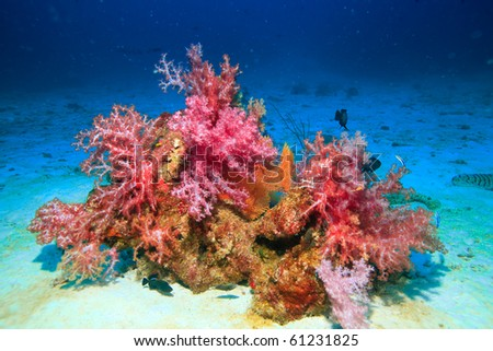 Beautiful soft coral and seafan - stock photo