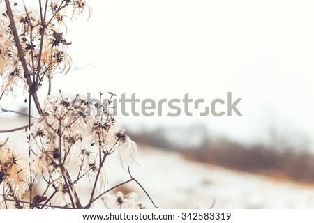 Beautiful soft photo of dryed branch at winter landscape - stock photo