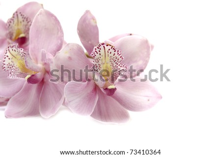Beautiful soft pink orchid