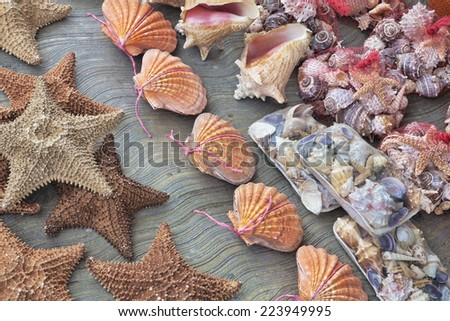 Beautiful souvenir seashells for sell in Cancun Mexico - stock photo