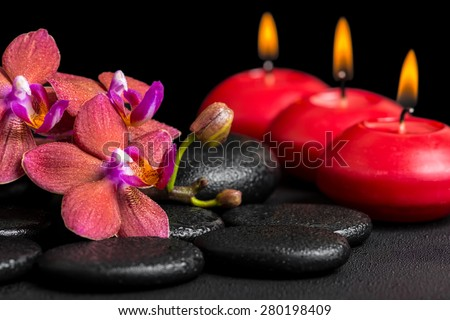 beautiful spa background of blooming twig red orchid flower, phalaenopsis with dew and candles on zen basalt stones, closeup - stock photo