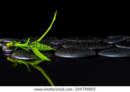 beautiful spa background of green branch bamboo on zen basalt stones with dew - stock photo