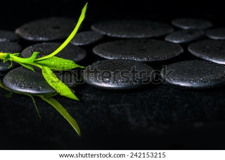 beautiful spa background of green branch bamboo on zen basalt stones with dew in reflection water - stock photo