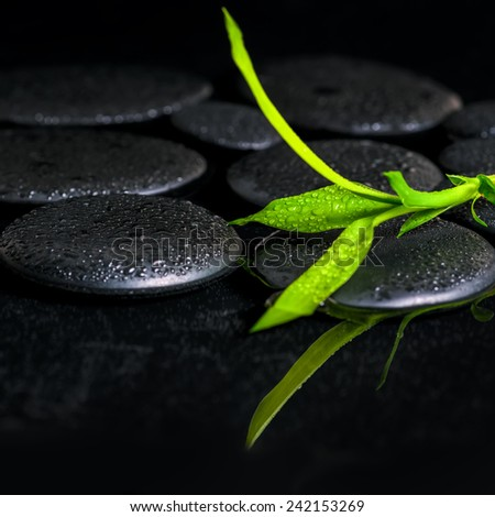 beautiful spa background of green branch bamboo on zen basalt stones with dew in reflection water, closeup - stock photo