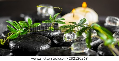 beautiful spa background of green twig passionflower with tendril, ice and candles on zen basalt stones with drops, panorama - stock photo