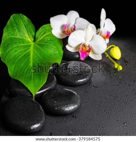 beautiful spa concept of blooming white and red orchid flower, phalaenopsis with dew and green leaf on black zen stones, close up - stock photo