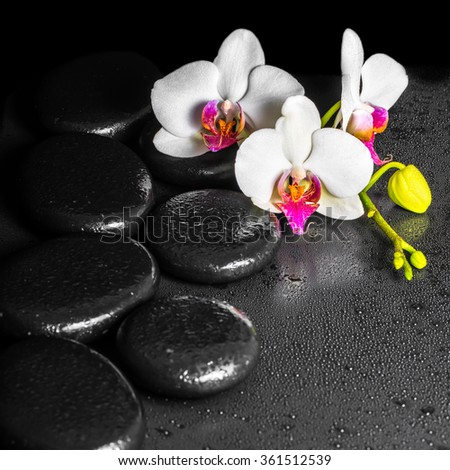 beautiful spa concept of blooming white and red orchid flower, phalaenopsis with dew on black zen stones, close up